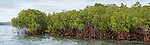 Rakiraki, Viti Levu, Fiji; a panoramic view of mangroves protecting the shoreline