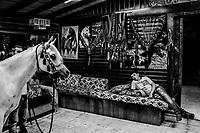 A boy looks on as Fares Salim, 22, displays a white mare out of her stall, on June 07, 2016 at a stable above the Garden of Gethsemane in Tur, East Jerusalem. <br /> Photo Daniel Berehulak for the New York Times