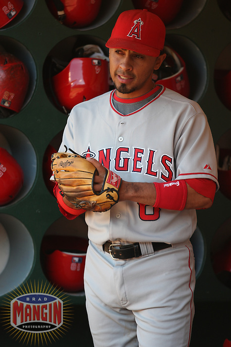 OAKLAND, CA - JUNE 7:  Maicer Izturis of the Los Angeles Angels of Anaheim gets ready in the dugout before the game against the Oakland Athletics at the McAfee Coliseum in Oakland, California on June 7, 2008.  The Angels defeated the Athletics 5-3.  Photo by Brad Mangin