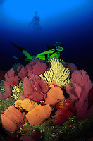 """This diver (MR) was photographed on a reef just off of """"Land's End"""", the bottom of the Baja Peninsula that separates the Pacific Ocean with the Sea of Cortez. Mexico."""