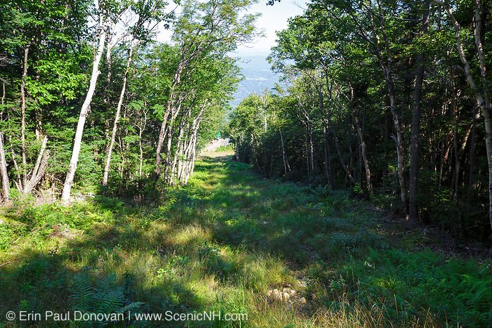 The historic Richard Taft Trail, cut by the Civilian Conservation Corps in 1932, on Mittersill Mountain in the New Hampshire White Mountains during the summer months. The Mittersill-Cannon Trail follows this section of the Taft Trail.