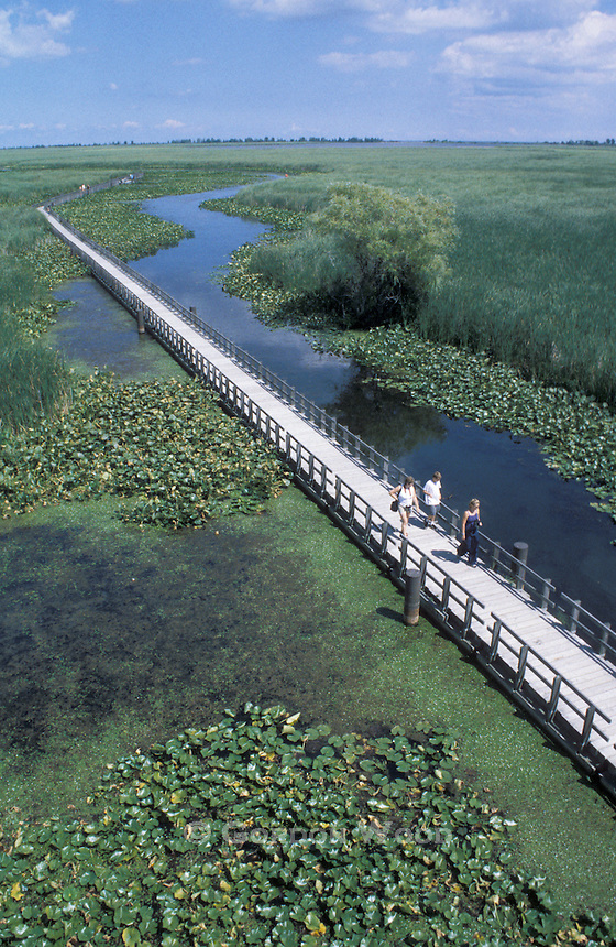 Boardwalk and Visitors in Point Pelee National Park