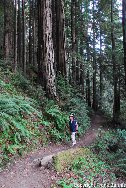 Hiker on trail in Fores of Nisene Marks State Park, Aptos