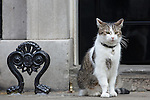 © Joel Goodman - 07973 332324 . 11/05/2015 . London , UK . Larry the cat outside 10 Downing Street this morning (11th May 2015) . Photo credit : Joel Goodman