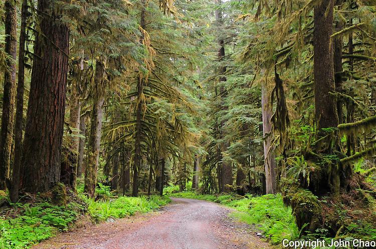 A dirt and gravel road winds through Carbon River Old Growth Rainforest, Mount Rainier National Park