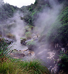 Geo thermal activity spring and river of hot water, Waimangu volcanic valley, near Rotorua, north island, New Zealand