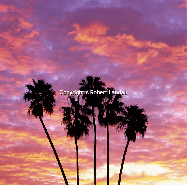 Colorful sunset and palm trees in Beverly Hills