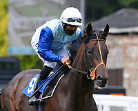 The Cincinnati Kid ridden by Sean Levey  goes down to the start of The Federation Of Bloodstock Agents Novice Stake   during Horse Racing at Salisbury Racecourse on 13th August 2020