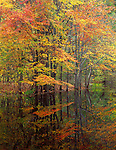 Delaware Water Gap NRA, PA/NJ<br /> Deciduous trees with autumn colored leaves reflecting in a still pool near the Delaware River