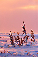 Sunset on Hudson Bay coastline<br />
