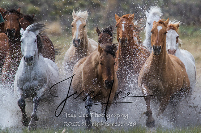 we are gonna get wet! Cowboys working and playing. Cowboy Cowboy Photo Cowboy, Cowboy and Cowgirl photographs of western ranches working with horses and cattle by western cowboy photographer Jess Lee. Photographing ranches big and small in Wyoming,Montana,Idaho,Oregon,Colorado,Nevada,Arizona,Utah,New Mexico.