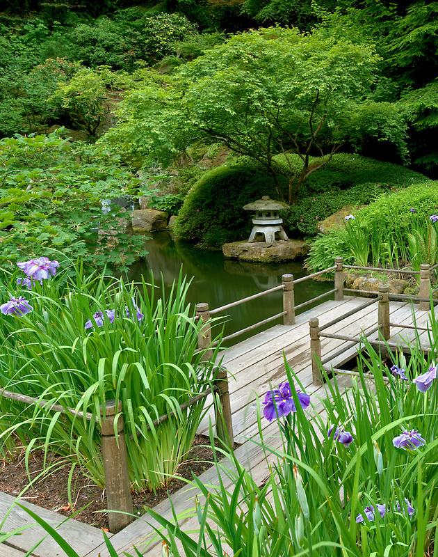 Iris and walkway. Portland Japanese Gardens. Oregon
