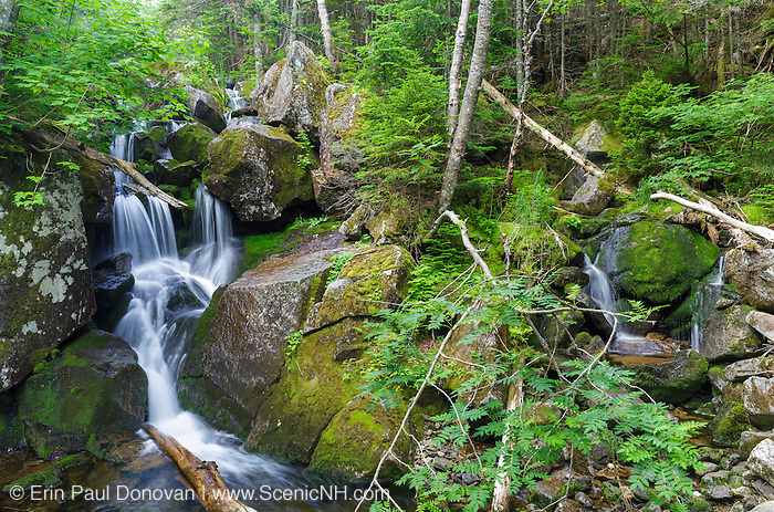 One of the many cascades located above Duck Fall on Snyder Brook in Low and Burbank's Grant, New Hampshire during the summer months.