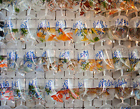 111229-N-DR144-404 HONG KONG (Dec. 29, 2011) Shopping in the Goldfish Market in Kowloon, Hong Kong. (U.S. Navy photo by Mass Communication Specialist 2nd Class James R. Evans/Released)