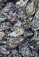 Europe/France/Aquitaine/33/Gironde/Bassin d'Arcachon/La Teste de Buch: Port ostréicole - Huîtres d'Arcachon dans les bassins d'affinage