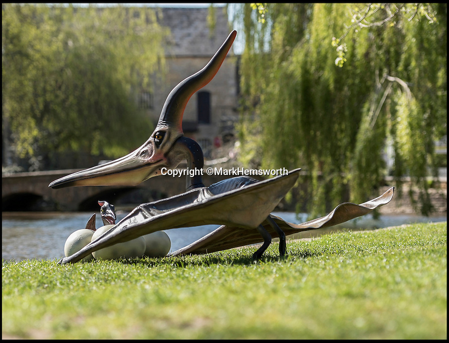 BNPS.co.uk (01202 558833)<br /> Pic: MarkHemsworth/BNPS<br /> <br /> A dinosaur on Bourton-on-the-Water's river bank.<br /> <br /> Visitors to one of Britain's oldest villages are used to seeing historic sights but many couldn't believe their eyes when a herd of life-sized dinosaurs descended on the picturesque settlement.<br /> <br /> The group of model dinosaurs made a startling sight as they made their way through Bourton-on-the-Water in Gloucestershire while on their way to the nearby Birdland attraction where they will form part of a new display.<br /> <br /> Some people looked on curiously as a velociraptor crossed the village's historic stone bridge while a cearadactylus in the River Windrush also caused some bemusement.