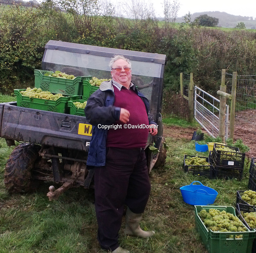 Bmth News (01202 558833)<br /> Pic: DavidDower/BNPS<br /> <br /> Farmer Les White with the first crop, he donated a field to start the vineyard off...<br /> <br /> A village pub skittle team who formed a wine-growing syndicate have bowled industry experts over with their award-winning version of Champagne.<br /> <br /> But wine lovers may struggle to lay their hands on a bottle of the tasty first vintage, as the two acre site barely produces enough vino to keep the thirsty locals happy...and you certainly won't find it in a main stream supermarket.<br /> <br /> The idea to plant their own grapevines came to the four drinkers in 2007 as a result of a conversation in their local pub in Shaldon, Devon.<br /> <br /> In 2013 the group, called Dalwood Vineyard, took their first harvest and in 2015 they celebrated its first bottle of sparkling wine which has now won a bronze medal in the prestigious Decanter World Wine Awards.