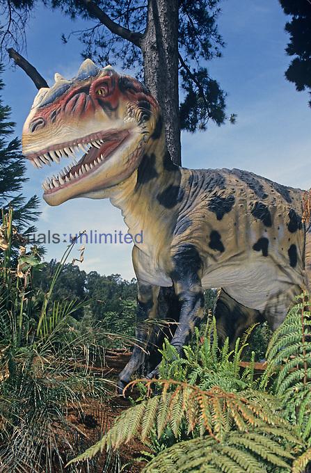 Restoration of an Allosaurus Dinosaur, Jurassic Period, 145 m.y.a., Western North America.