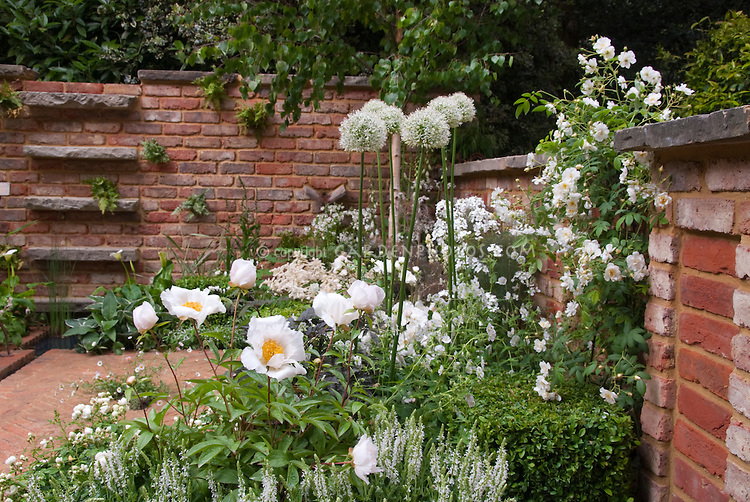 White FLowers in Garden, Roses, Peony, Alliumd | Plant ...