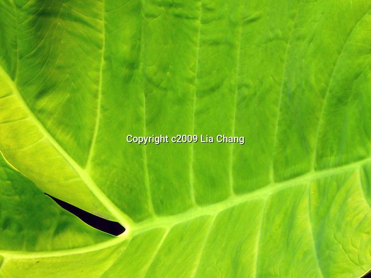 Lia Chang Botanical Beauties Series 9/4/09 at Brooklyn Botanic Garden. Photo by Lia Chang