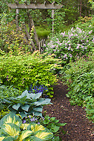 Kolkwitzia Dreamcatcher, Syringa Palibin, Acer griseum, Geranium Samobor, Helleborus, Hosta Great Expectations, Hosta Hadspen Blue or is it Halcyon, Hakonechloa Allgold, Laurentia, Physocarpus, Betula birch trees, gate, trellis, picket fence, spring garden scene