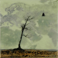 Encaustic painting with photography of bare autumn tree with crow. SOLD