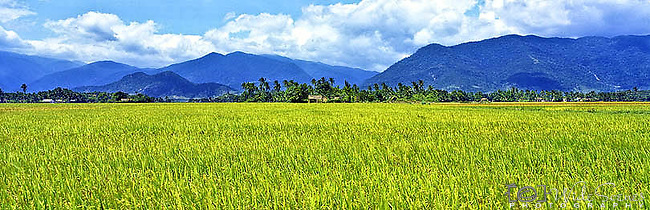 Vietnam Panorama - Paddy fields in central Vietnam.<br />