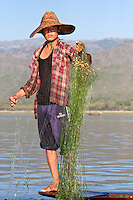 Myanmar, Burma.  Fisherman with Net, Inle Lake, Shan State.