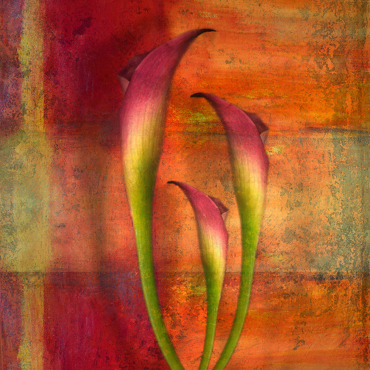 Curving flowers on a textured background