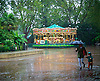 Weather - Summer downpour at London Zoo, Regent's Park, London, Great Britain <br /> 26th August 2015 <br /> <br /> torrential rain at London Zoo <br /> <br /> Photograph by Elliott Franks <br /> Image licensed to Elliott Franks Photography Services