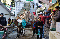 On the main alley of Ghangaria - 10000 ft above sea level - Sikh pilgrims ride up to Hem Kund