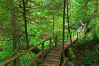 Boardwalk in the temperate rain forest<br /> Pacific Rim National Park<br /> British Columbia<br /> Canada