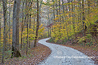 63895-14415 Road in fall at LaRue-Pine Hills in Shawnee National Forest, IL