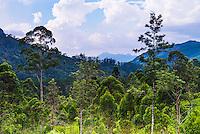 Jungle scenery in the 'hill country', aka 'Sri Lanka Highlands', Nuwara Eliya District of Sri Lanka, Asia. This is a photo of jungle scenery in the 'hill country', aka 'Sri Lanka Highlands', Nuwara Eliya District of Sri Lanka, Asia.