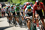 The peloton including Green Jersey Peter Sagan (SVK) Bora-Hansgrohe during Stage 5 of the 2019 Tour de France running 175.5km from Saint-Die-des-Vosges to Colmar, France. 10th July 2019.<br /> Picture: ASO/Alex Broadway | Cyclefile<br /> All photos usage must carry mandatory copyright credit (© Cyclefile | ASO/Alex Broadway)