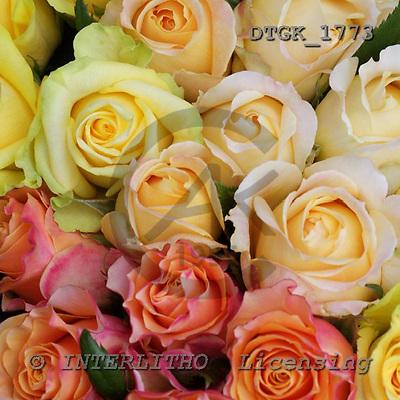 Gisela, FLOWERS, photos, DTGK1773,#F# Blumen, flores, retrato