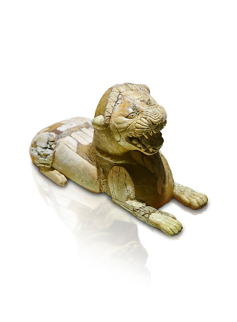 Phrygian ivory statuette carved as a roaring lion lying down from a table base decoration. From Gordion. Phrygian Collection, 8th-7th century BC - Museum of Anatolian Civilisations Ankara. Turkey. Against a white background