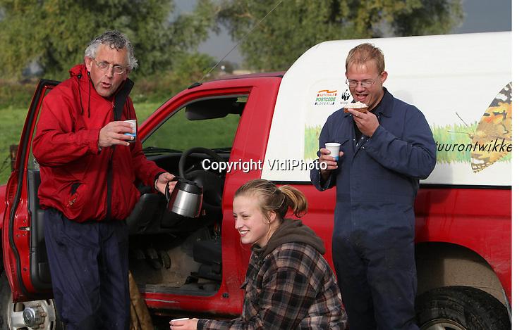 Foto: VidiPhoto..OOIJ - Vrijwilligers en medewerkers van de stichting Free Nature hebben donderdag bij de Bisonbaai in de uiterwaarden bij Ooij (Nijmegen) enkele tientallen Gallowayrunderen gevangen voor de slacht en verkoop. Het 'oogsten' van deze wilde grazers gebeurt voornamelijk in de herfstperiode, voordat de tijd van voedseltekorten aanbreekt. Het vlees van de natuurbeesten is zo gezond en daarmee zo populair dat lang niet aan de enorme vraag voldaan kan worden. Alleen al in de Gelderse Poort (980 ha.) beheert de stichting, een samenwerkingsverband van natuurboeren, zo'n 600 Schotse Hooglanders, Gallowayrunderen en Rode Geuzen.