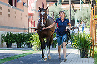 USA-Chloe Reid's Luis P is presented during the Horse Inspection. 2019 ESP-CSIO Barcelona - Longines FEI Nations Cup Jumping Final. Wednesday 2 October. Copyright Photo: Libby Law Photography