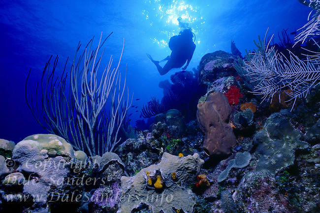 Scuba Diver swims above a colorful coral reef off Grand Cayman Island, BWI