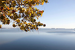 Yellow-leaved tree in foreground of view of Florida, Bay, Atlantic Ocean, Everglades National Park, Florida, USA