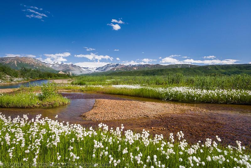 College creek, Alaska cotton, Alaska range mountains.