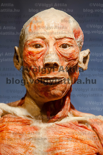 Face of a preserved human body on display at an exhibition in Budapest, Hungary on April 02, 2012. ATTILA VOLGYI