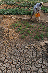 NIGER Zinder, Dorf Baban Tapki, Bewaesserung eines Gemuesegartens aus einem angelegten Wasser Reservoir / NIGER Zinder, village Baban Tapki, irrigation of vegetable garden from water pond , MORE PICTURES ON THIS SUBJECT AVAILABLE!!