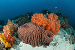 Lush coral reef with soft corals and barrel sponges.