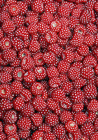 Detail of Wineberries, Rubus phoenicolasius
