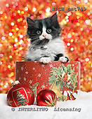 Xavier, CHRISTMAS ANIMALS, photos+++++,SPCHCAT749,#xa#