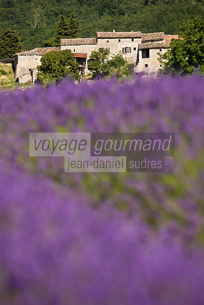 Europe/France/Rhône-Alpes/26/Drôme/Teyssières: Champ de Lavande