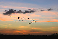 A multitude of sunset colors are displayed  at the Everglades as numerous birds fly to their night resting place. Photographed at Arthur Marshall Loxhatchee Preserve. Boynton Beach, Florida.