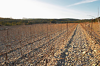 Domaine de Mas de Martin, St Bauzille de Montmel. The Pic St Loup mountain top peak. and The Montagne Massif de l'Hortus mountain cliff in the distance. Gres de Montpellier. Languedoc. Terroir soil. In the vineyard. France. Europe. Soil with stones rocks. Calcareous limestone.